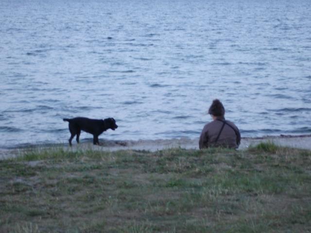 Intet mere afslappende end at se glade hunde pjaske i vandkanten og hundeejere nyde solnedgangen