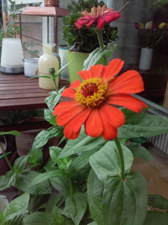 Efter meeeget lang ventetid blev det til blomster alligevel, så jeg kan godt finde tålmodighed til skriveprocessen ikke...?